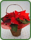 Poinsettia Basket with Wrap