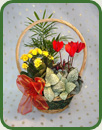 Yuletide Basket Small